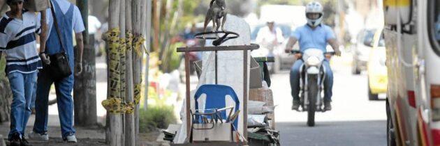 El perro reciclador