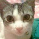 Envenenan gato en Boluevar del Cacique