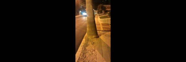 Destrucción de árboles en el sector