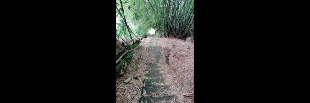 Peligro en sendero ecológico