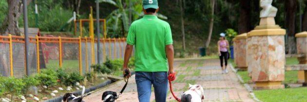 Paseadores caninos: a reglamentarse