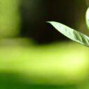Usted puede ayudar en  la siembratón de 10 mil  árboles en Bucaramanga