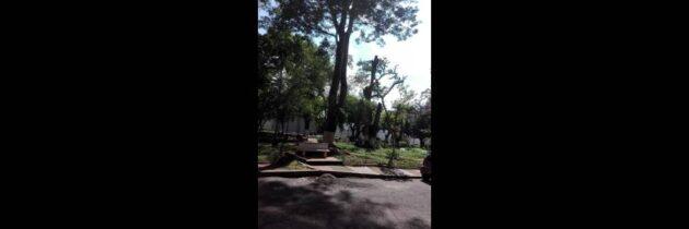 Raíz de un árbol sigue causando  daños