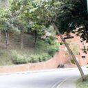 Temor ante posible  caída de árbol