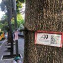 AMB retiró guayas de los  árboles de Cabecera