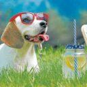 Importancia de la hidratación en la mascota