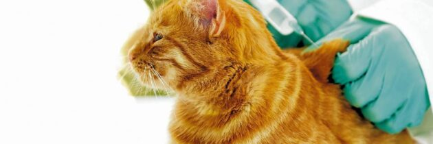 ¿Por qué es importante  vacunar a nuestras mascotas?