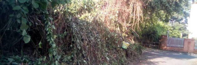 Vecinos de La Floresta piden poda para zonas verdes