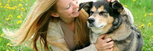 Perros geriátricos:  Aspectos a tener en cuenta