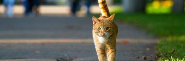¿A qué se exponen los gatos  cuándo salen  a la calle?