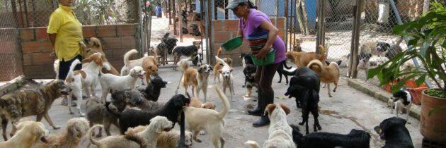 Nueva jornada de adopción de mascotas