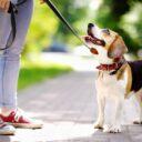 Ciudadana prohíbe pasear mascotas frente a su casa