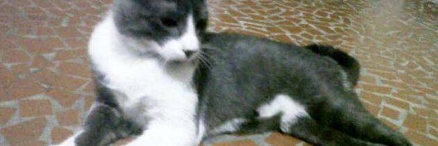 Gato perdió los pasos de su hogar