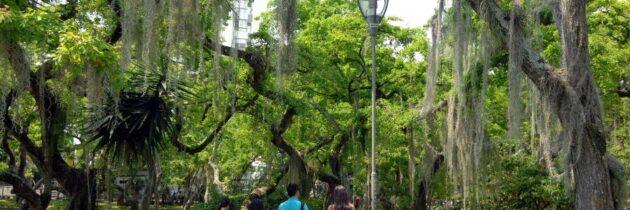 Postule los árboles insignia de Cabecera