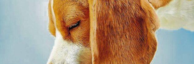 Cinco cosas que debe saber sobre la comida húmeda para mascotas