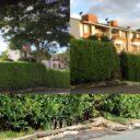 Piden arreglo de andén afectado por raices de árbol