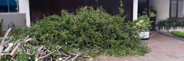 Otro árbol mutilado