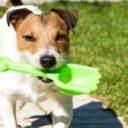 Cuide sus mascotas y proteja el medio ambiente
