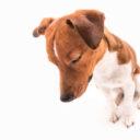 ¿Mi mascota puede sufrir de depresión?