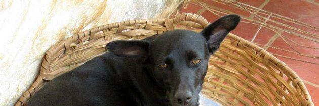 Perros y gatos abandonados esperan un hogar