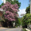 ¿Qué pasa con los árboles de Cabecera?