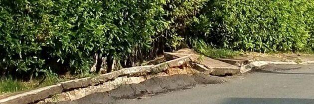 Denuncian negligencia en la tala de un árbol en Altos de Pan de Azúcar