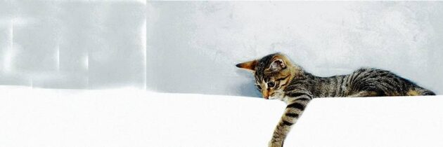 ¿Qué hace especial al gato?