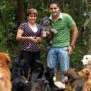 Al rescate de los perros